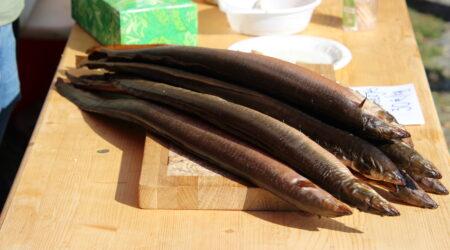 Angerjas on kala, mille kalorite väärtus on võrreldav rasvase sealihaga. Foto Raimo Metsamärt.